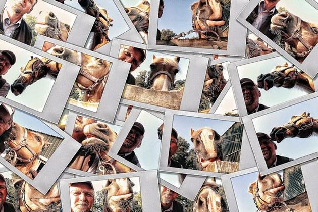 shape_collage-colagem_de_fotos